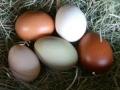 k-Eier unserer Frau Mösli & Team